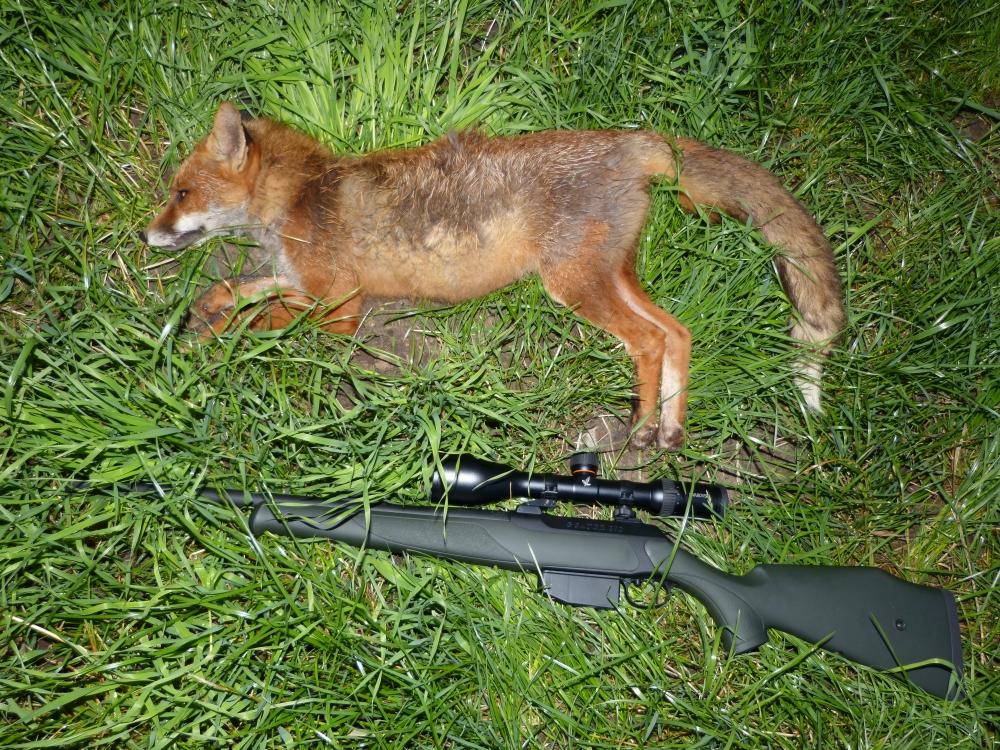 Die Jagd auf Fuchs im Jahresverlauf