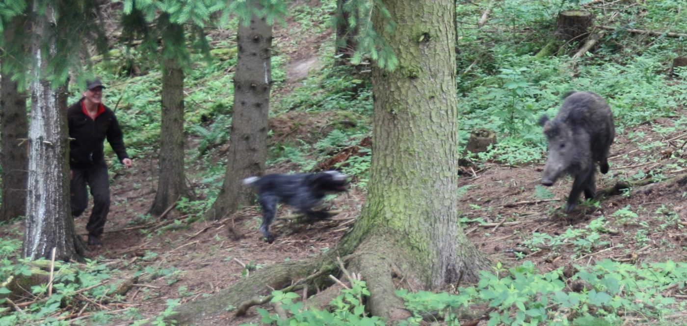 Hundefuehrerin-motiviert-Jagdhund