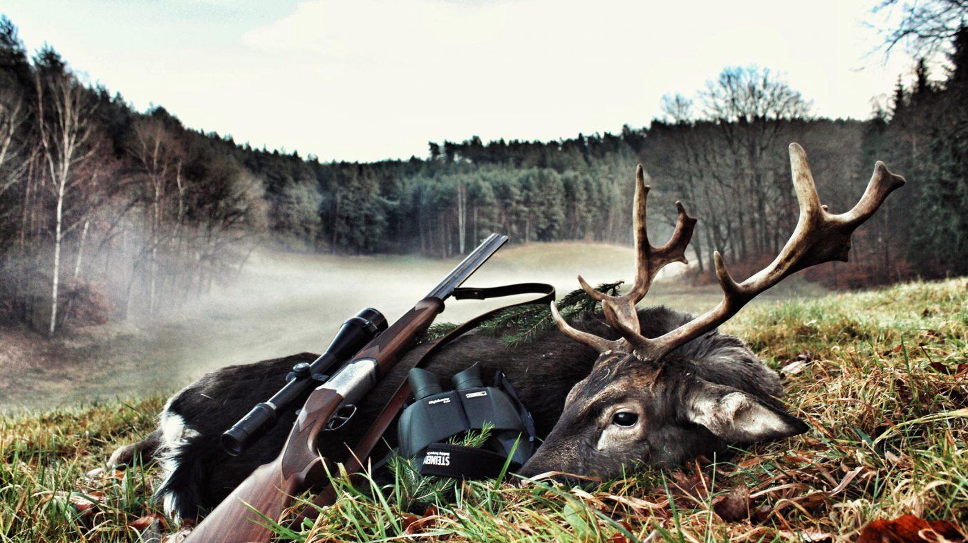 Deutscher-Jagdblog-Damhirsch-Hintergrund
